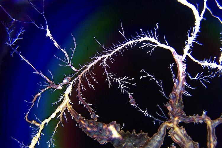 Takie zniszczenia mikrofale wywołują w płycie DVD włożonej do kuchenki. Fot. Roj/Flickr