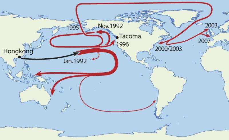 Trasy, jakie pokonały zgubione w Pacyfiku gumowe kaczki. Rys. NordNordWest/Wikimedia