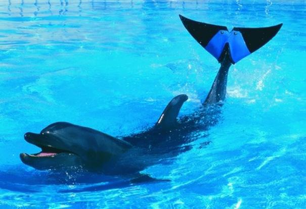 Delfin Fuji