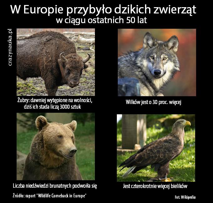 """W Europie w ciągu 50 lat przybyło dzikich zwierząt - podaje raport """"Wildlife Comeback in Europe"""". Fot. Wikipedia"""