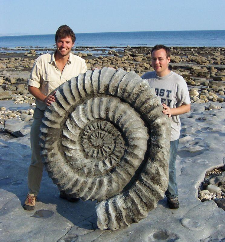 Takiej wielkości były amonity. Na zdjęciu Steve Leonard i Paul Williams z kanału BBC trzymają wierną replikę gigantycznego amonita znalezionego na plaży niedaleko miasta Lyme Regis w Wielkiej Brytanii. Fot. Paul Williams