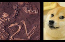 Wszystkie psy pochodzą z Europy