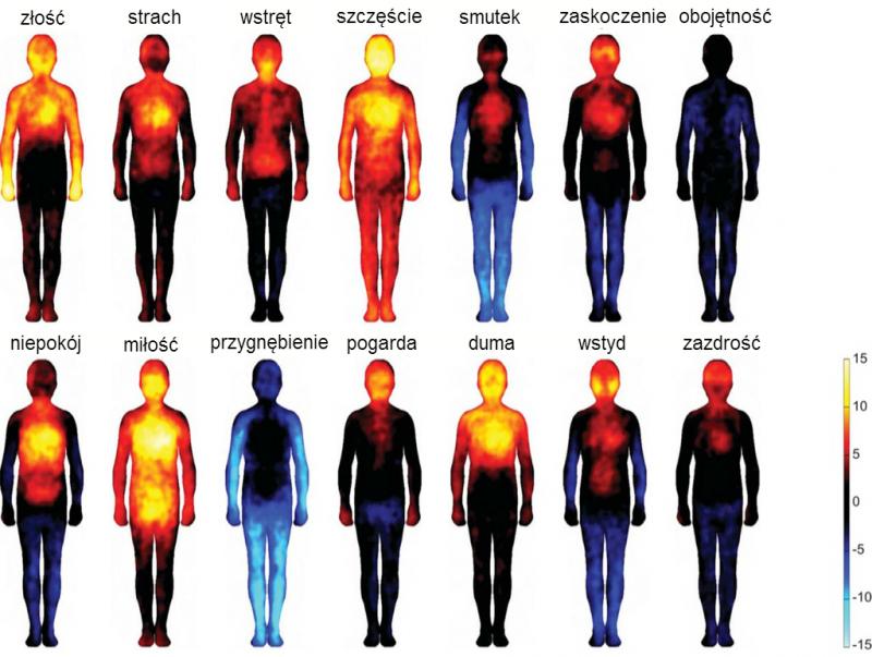 Mapa emocji w ludzkim ciele. Ilustracja: Aalto University