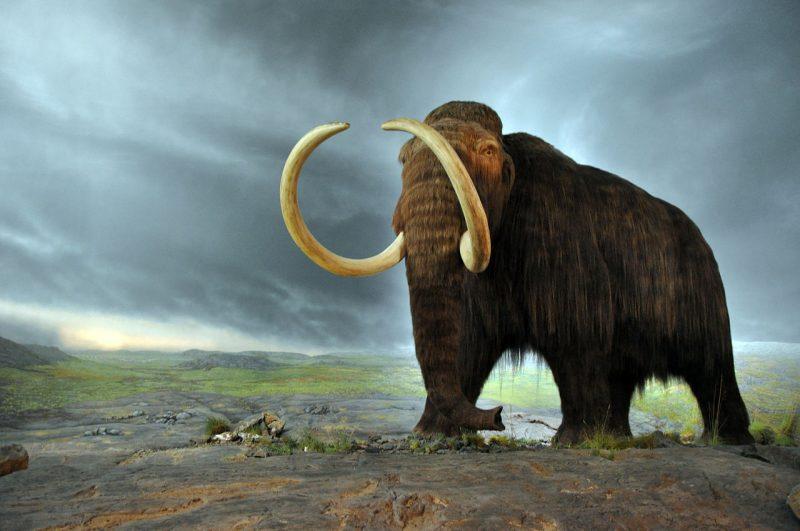 Mamuty wyginęły ok. 2000 roku p.n.e.