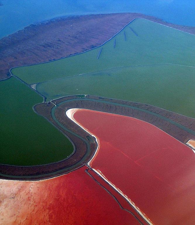 Salina w Zatoce San Francisco. Fot. Doc Searls/Wikipedia
