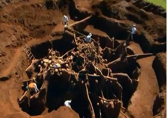 Ogromne mrowisko zajmuje niemal 50 metrów kw. i sięga do 8 metrów pod ziemią. Fot. Youtube