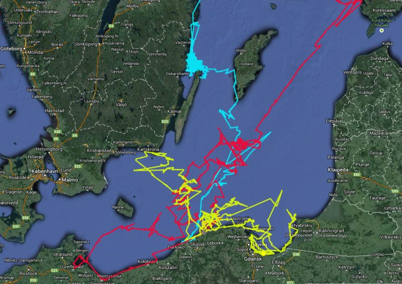Trasy pokonywane w Bałtyku przez wyposażone w nadajniki foki wypuszczone z helskiego fokarium