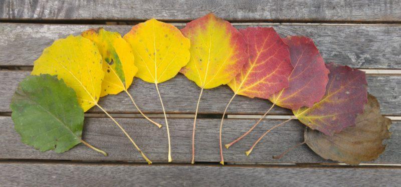 Dlaczego liście żółkną i czerwienieją? Fot. Crazy Nauka