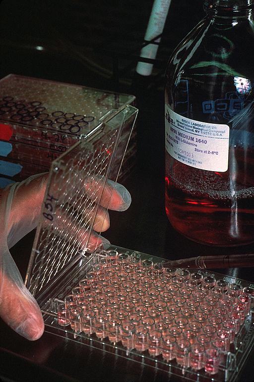 Hodowlla komórek wytwarzających przeciwciała monoklonalne. Fot. National Cancer Institute/Wikimedia