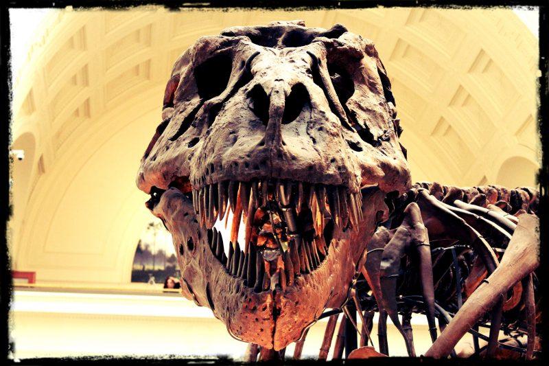 Czy ciemna materia zabiła dinozaury? Fot. whitejillm