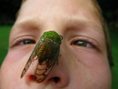 Jak zobaczyć cykadę na własnym nosie? Fot. OakleyOriginals/Flickr