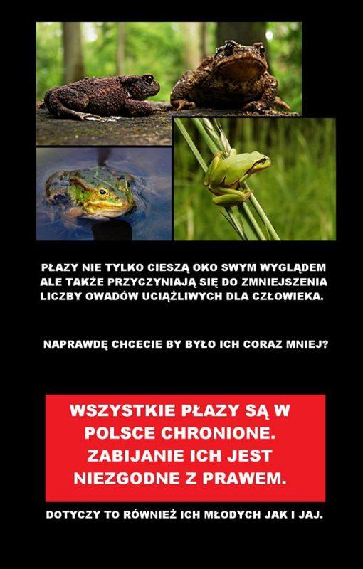 Płazy są w Polsce chronione!