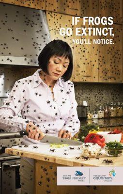 Gdyby wyginęły żaby, zauważyłbyś to. Fot. Vancouver Aquarium