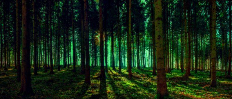 Wiemy, ile jest drzew na świcie. Fot. Franzisko Hauser
