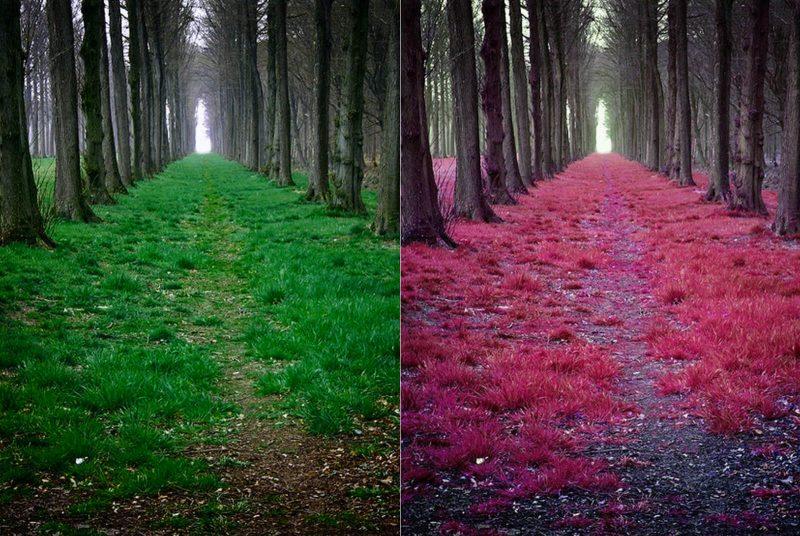 """""""Mistyczny"""" las – porównanie. Fot. Sander Copier"""