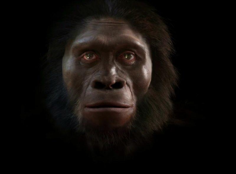 Ewolucja człowieka. Autor: John Gurche