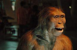 Kim jest Lucy Australopithecus? Tajemniczy przodek czy przypadkowy szkielet?