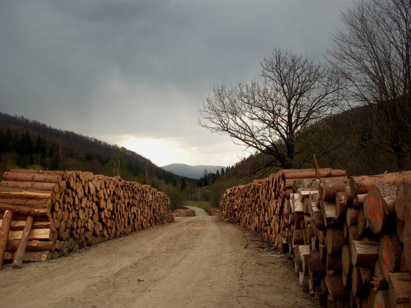 Ciśniańsko-Wetliński Park Krajobrazowy. Fot. Joanna.kra/Wikimedia