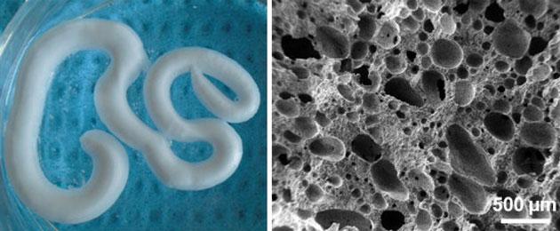 To nie robak, to nowa pianka do naprawy kości. Po prawej jej struktura pod mikroskopem. Fot. Zhang et al., Acta Biomaterialia, 2015
