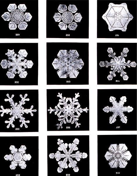 Zdjęcie płatków śniegu zrobione w 1902 roku. Fot. Wilson Bentley