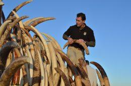 Sri Lanka zniszczyła swoje zapasy nielegalnej kości słoniowej