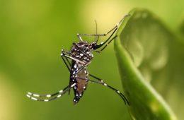 Wirus Zika może powodować małogłowie – wszystko, co trzeba o nim wiedzieć