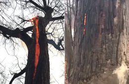 """ZOBACZ: W Ohio natrafiono na przerażające """"piekielne drzewo"""" – co odpowiada za ten fenomen?"""