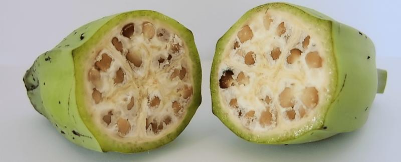 Modyfikacja genetyczna nie jest taka zła. Fot. Warut Roonguthai/Wikimedia