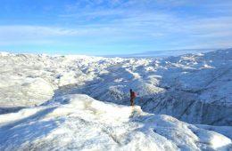 Najwięksi twardziele żyją na lodowcach