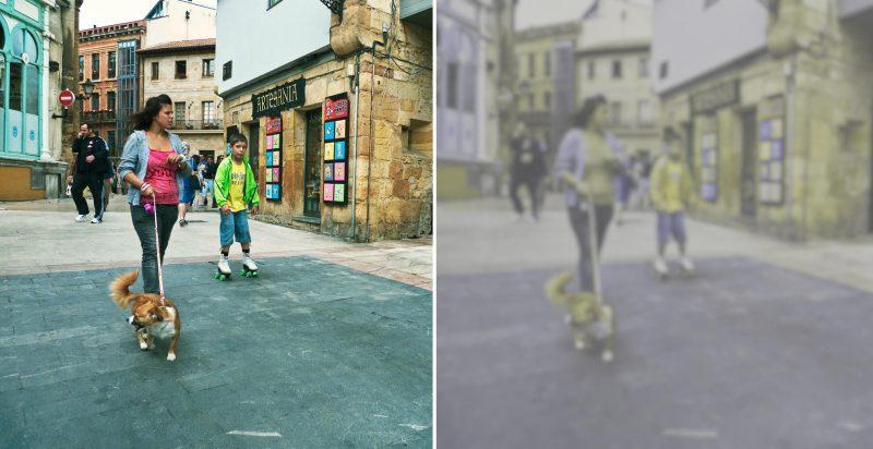 Jak widzą świat ludzie a jak psy. Fot. R/dog-vision.com