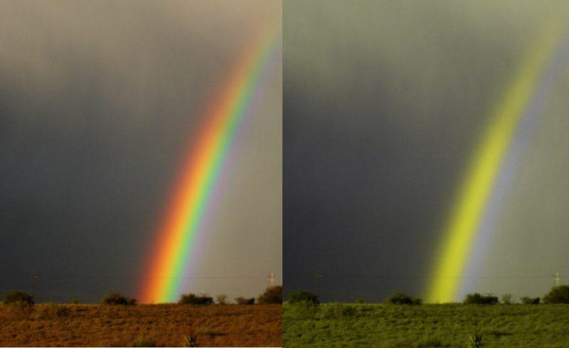Jak psy widzą kolory? Po prawej tęcza widziana w barwach odbieranych przez psa. fot. Rudi von Staden