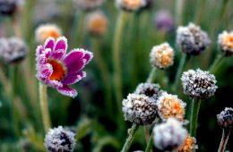 """Czy """"zimna Zośka"""" i """"zimni ogrodnicy"""" to mit czy faktyczne zjawisko?"""