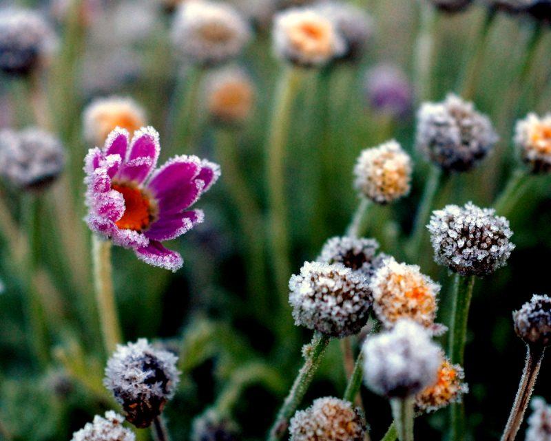 """Czy """"zimna Zośka"""" i """"zimni ogrodnicy"""" to mit czy faktyczne zjawisko? Fot. RC Designer"""