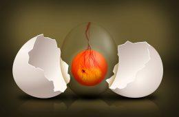 Czy można wyhodować kurczaka z jajka bez skorupki?