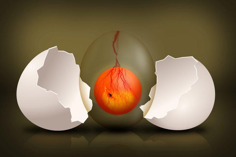 Czy można wyhodować kurczaka z jaja bez skorupki?