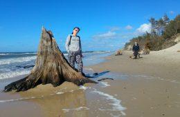 Las sprzed 3000 lat odsłonięty przez Bałtyk – jak tam dotrzeć?