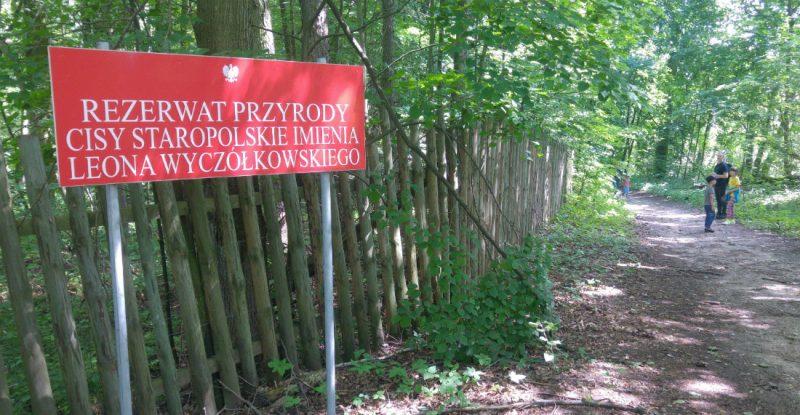 Rezerwat Cisy Staropolskie. Fot. Crazy Nauka