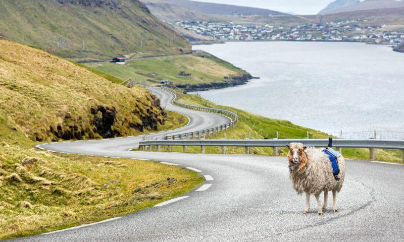 Źródło: Visit Faroe Islands