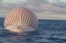 Kosmici na Oceanie Indyjskim? Nie, to tylko…