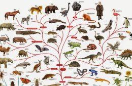 Trudno sobie wyobrazić, że na świecie jest aż tyle gatunków