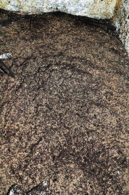 Podziemny kopiec mrówek ćmawych. Pod ścianą widać cmentarzysko. Fot. Wojciech Stephan; CC-BY 4.0
