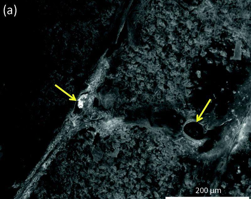 hollow-vessels