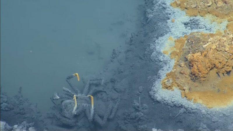 Szczątki zwierząt w podmorskim jeziorze. Fot. YouTube/EVNautilus