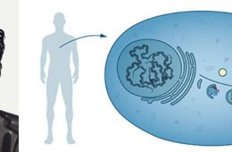 Nagroda Nobla 2016 z medycyny za sprzątanie wewnątrz komórek