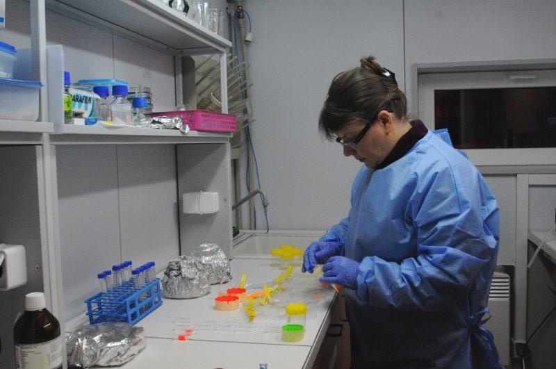 Dr Katarzyna Jankowska pracująca w stacyjnym laboratorium w stacji polarnej Hornsund im. Stanisława Siedleckiego na Spitsbergenie. Fot. Archiwum Katarzyny Jankowskiej