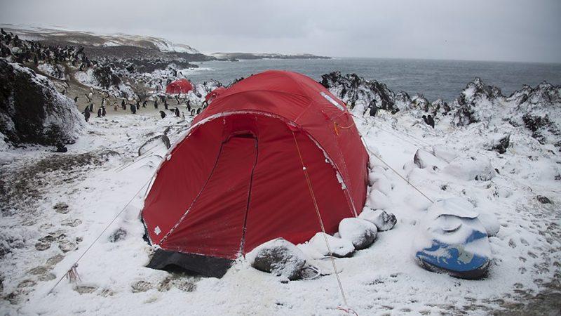 Ekipa BBC wśród pingwinów na antarktycznej Wyspie Zawadowskiego. Fot. BBC