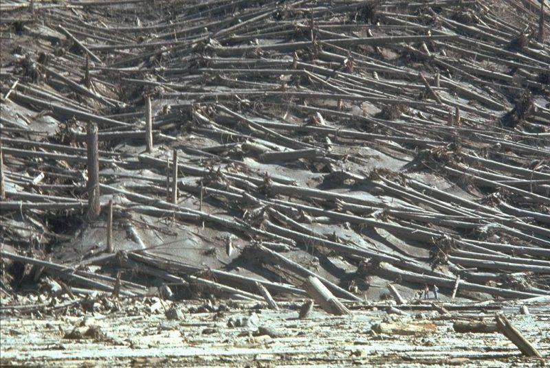 Powalone drzewa na wschodnim stoku Mt St. Helens po erupcji 18 maja 1980 roku. W prawym dolnym rogu zdjęcia widać naukowców USGS. Fot. Lyn Topinka/USGS