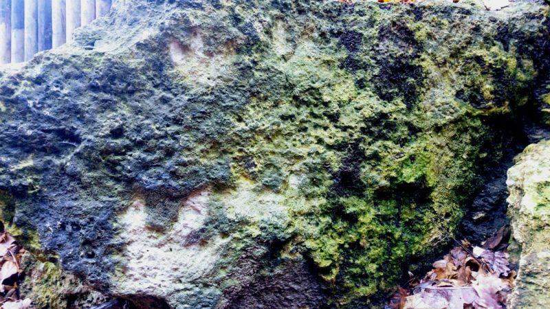 Tropy drapieżnego dinozaura podążającego śladem roślinożernych dryomorfonów. Żydowski Jar w Bałtowie. Fot. Crazy Nauka