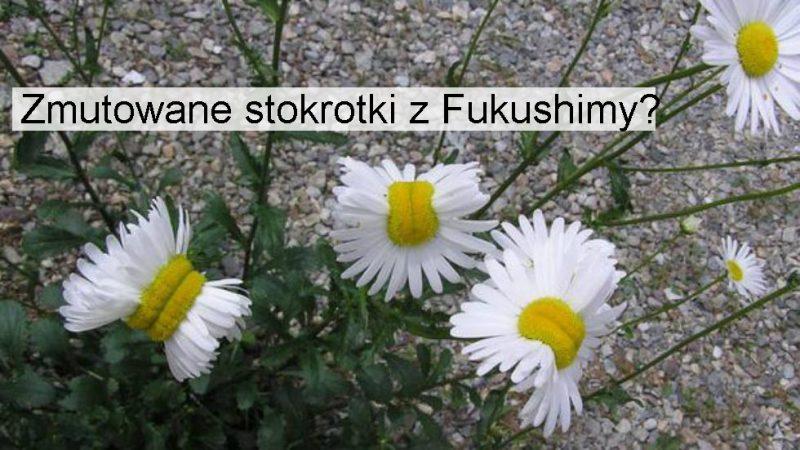 Fot. @San_kaido/Twitter