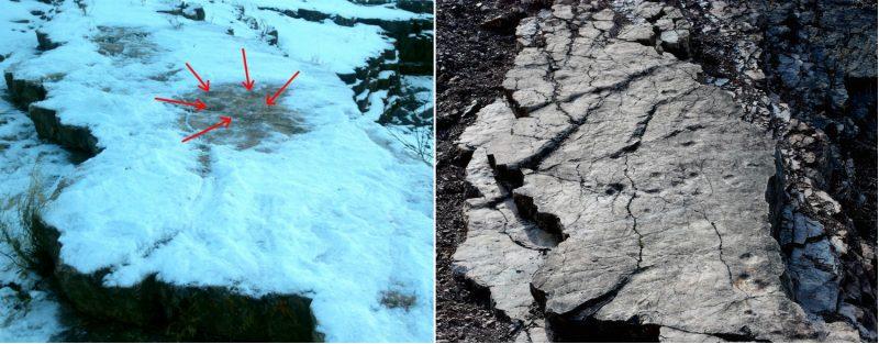 Tropy na skale w Zachełmiu - z lewej odśnieżone przez nas, z prawej - sfotografowane latem. Fot. Crazy Nauka/Gmina Zagnańsk